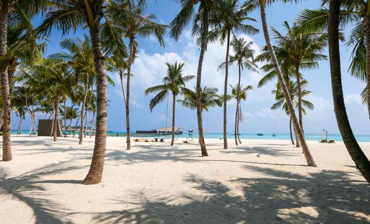 photo of beach and palm trees